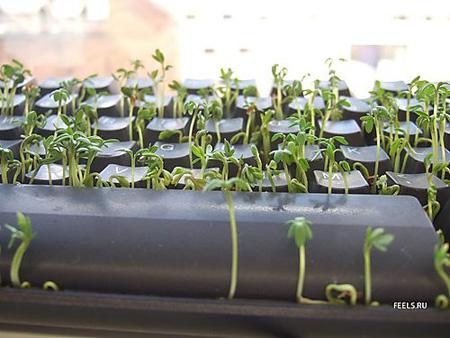 Keyboard Seedling Starter