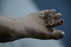 Coloured Flower Design (AincaArt) Tags: mountain lake flower floral berg foot switzerland see toe nagellack daisy blume farbig bunt fuss thunersee lack nailvarnish gänseblümchen tausendschön berneroberland berneseoberland zehe bellisperennis niederhorn lakethun gänseblume mungga massliebchen geblümt nikond7000 colorfullypainted colouredflowerdesign aincaart c6031054239114889938