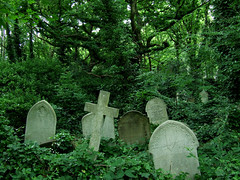 Forest with graves