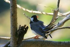 Bird of paradise (prasanth_p_jose) Tags: campus iit mandi lowerhimalayas beautifulpictures beautifulcampus kamand shivalikranges kamandcampus iitmandikamandcampus amazingcampuspictures wildlifeiitmandikamandcampus