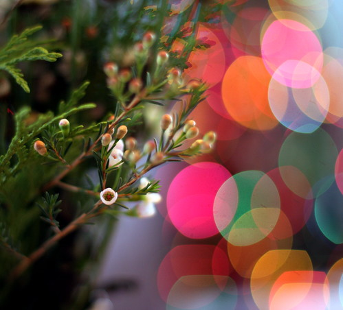 3196761470_5e27de4863 Forging Ahead & Merry Christmas!