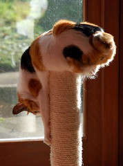 post cat 2