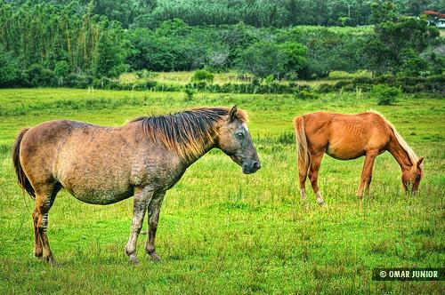 Cavalo | HDR