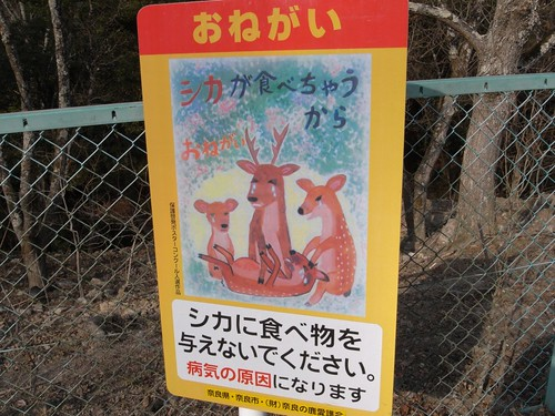 「高畑・春日大社」散歩-高畑の鹿-04