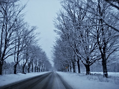 M-22, in white (farlane) Tags: road trees winter snow michigan leelanau m22 lovetheblur butiprobablyshouldntbetakingpictureswhiledriving