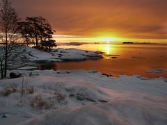 P1070010 (d66fce) Tags: morning sea snow tree ice sunrise finland frost