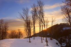 Faggi di sera (Paolo Albertosi) Tags: trees sunset sky sun mountain snow nature alberi clouds landscape landscapes flora nuvole cielo neve tramonti paesaggi boschi