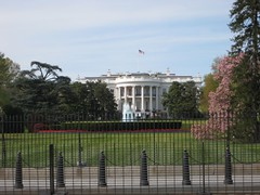 The White House (and lots of fence)
