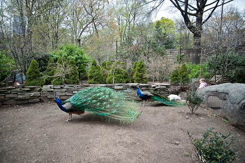 Central_Park_Zoo-26