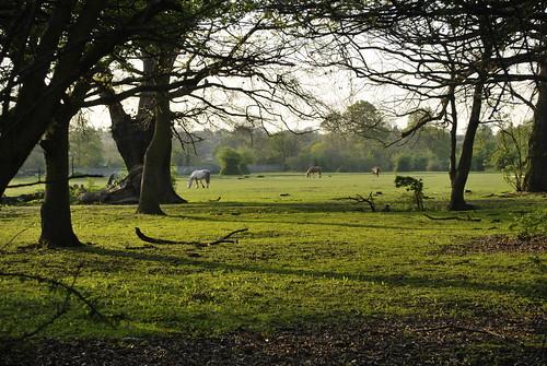 Mottingham paddock