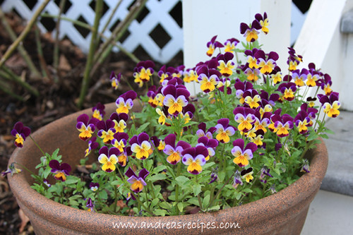 Andrea's Recipes - Johnny Jump Ups (violas)
