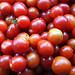 Tomates cherry, Cherry tomatoes.