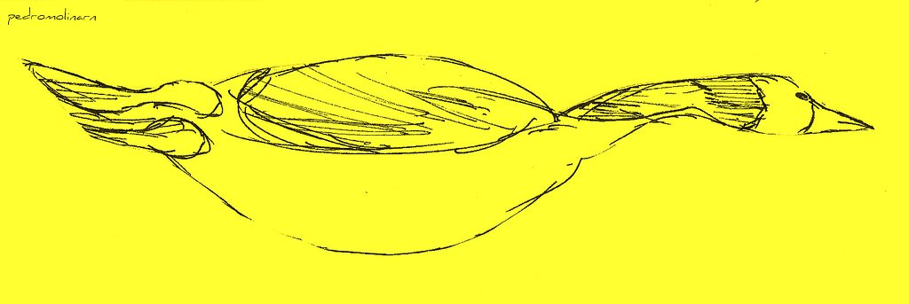 Gran pato en mar amarillo