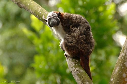Panama_Safari-63