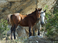 San Polo dei cavalieri - 16-8-2009 (LukeZeus#2) Tags: trip summer horses nature tivoli italia estate natura montagna cavalli escursioni s6500fd sanpolodeicavalieri montecatillo