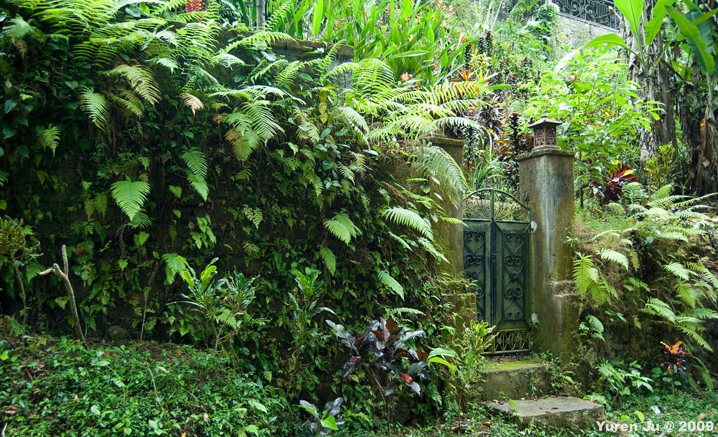 隱藏在森林裡的小門