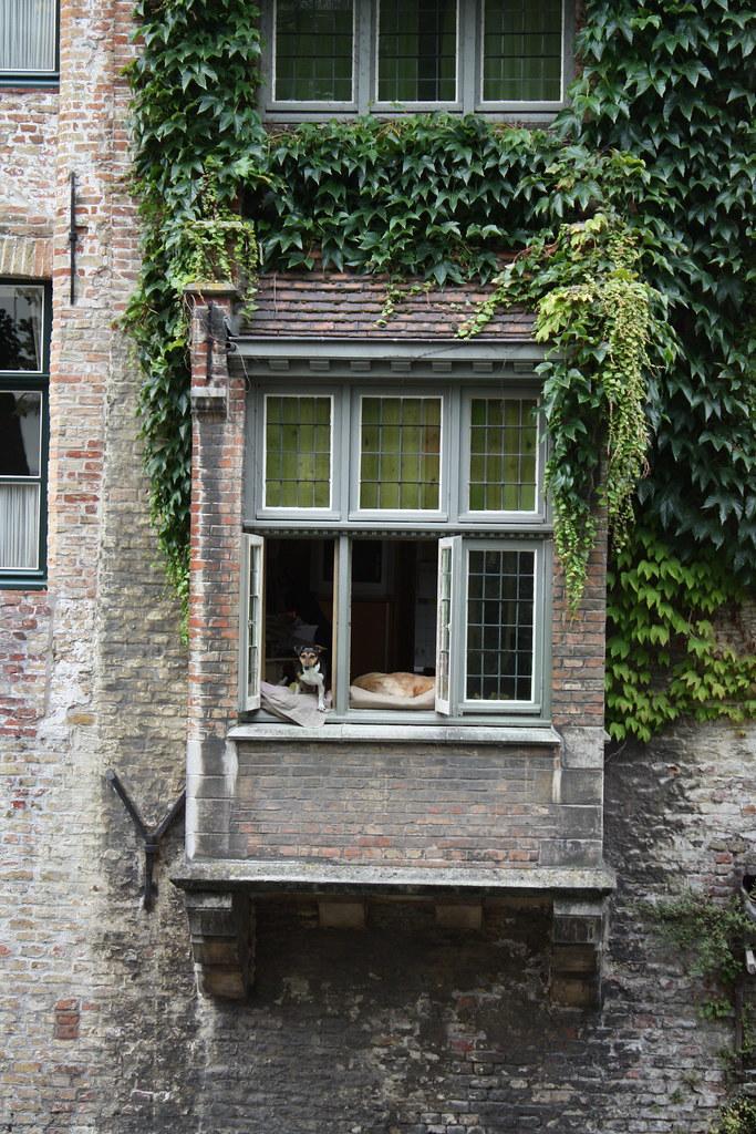 Bruges window dog