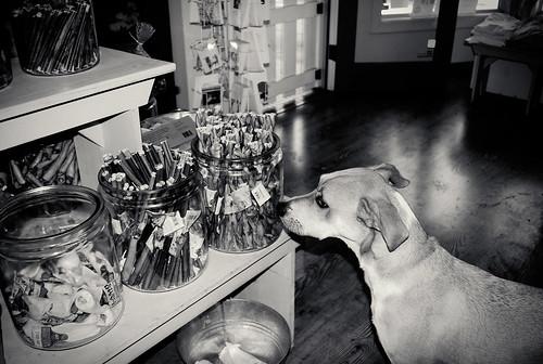 pablo wants the treats