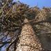 external image 3973634474_7d2b880137_s.jpg