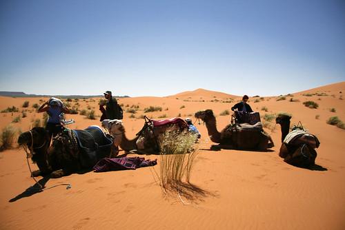 CamelGroup1
