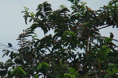 Otras aves migratorias, Torre Kekoldi