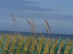 ~~  Meditation  ~~ (Lily C.) Tags: blue sky canada green beach fence grain vert bleu ciel grin plage cloture lilyc homersiliad tracadiesheilanb
