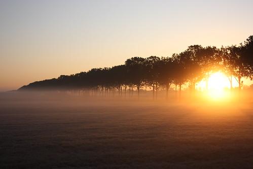 フリー画像| 自然風景| 樹木の風景| 朝日/朝焼け| 霧/靄|       フリー素材|