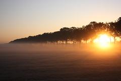 [フリー画像] [自然風景] [樹木の風景] [朝日/朝焼け] [霧/靄]       [フリー素材]