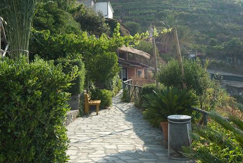 Vineyards, Cinque Terre, Italy