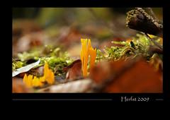 Herfst 4 (Eric_de_Boer) Tags: autumn mushroom veluwe gmt