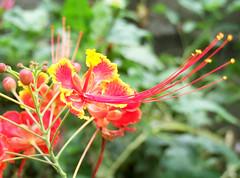 Alluring (LeelooDallas) Tags: nepal mountain flower macro forest landscape asia fuji zoom blossom dana petal finepix himalaya s9500 circuit 2009 annapurna bandipur iwachow
