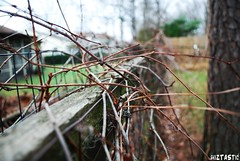 Like Vines We Intertwined. (raychel sonveeco.) Tags: fence outside vine thehushsound nikond60