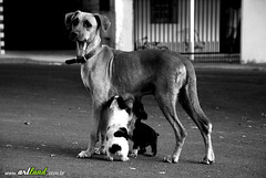 mae abandonada, no abandona seus filhos (artland) Tags: street bw dog pet baby pets art dogs animal animals studio mom expression mother carlos pb perro curitiba cachorro land bebe rua cachorros filhos me perrito cwb mamae artland filhotes lata ruas abandono viralata viralatas abandonado abandonada streetdogs streetdog babydog vira supershot babydogs supershots bezz carlosbezz artlandstudio