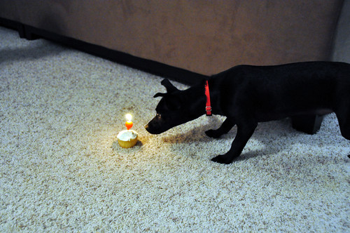 Hunting Cupcake