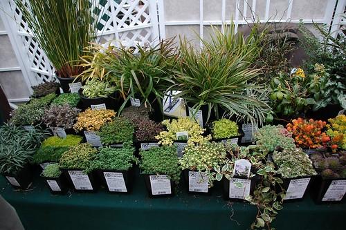 Glover Perennials
