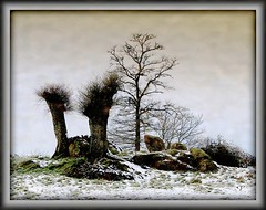 Tableau d'hiver.... (kate053(absente)) Tags: trees winter snow france tree hiver arbres neige arbre blanc soe winters visualart snowscape hivers snowscapes bej golddragon mywinners colorphotoaward theunforgettablepictures rubyphotographer kate053 sensationalphoto