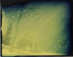 Tintype (mgenka) Tags: blue ag tintype 4x5 graflex csbsju dryplate sometrees rockaloid