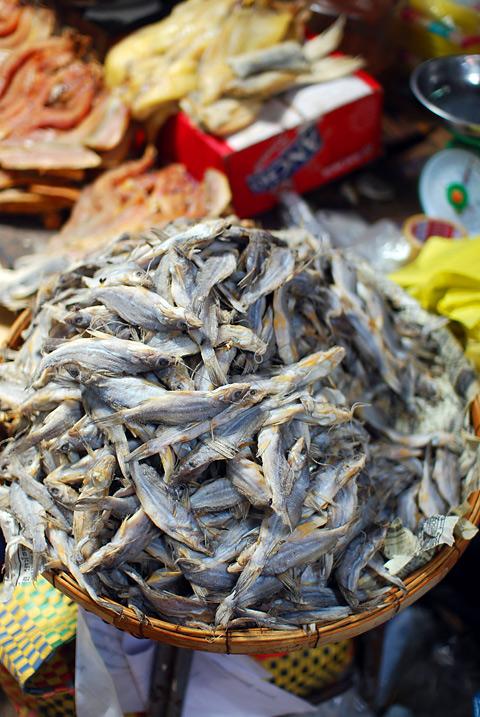 catfish20090420_2833