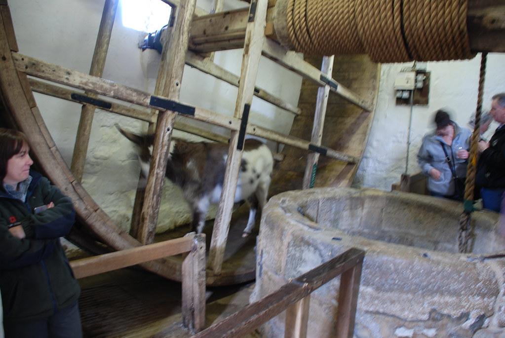 Donkey Wheel