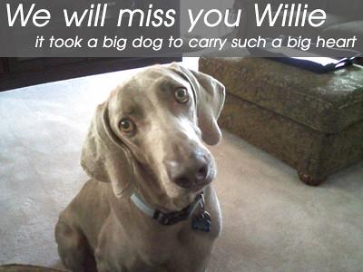 Willie the Weimaraner