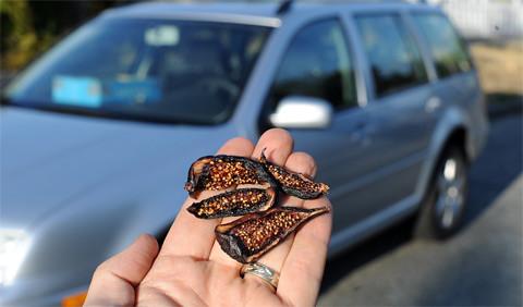 Dehydrate figs in a car