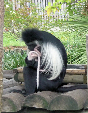 primate9