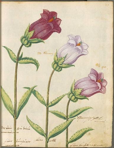 Hortulus Monheimensis 00085