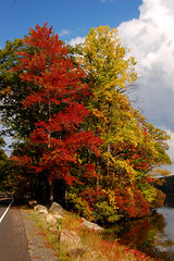 Hiking in Harriman State Park: yellow and red trees (Wei Zhang@Hudson) Tags: park autumn red newyork tree fall yellow state hiking hike foliage harriman