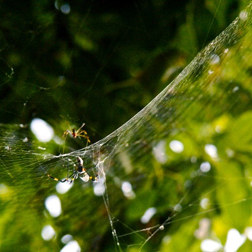 Examples Of Hyperbolas In Nature   www.pixshark.com ...