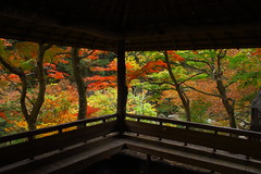 Blue Red Green Yellow... (satoson) Tags: autumn nature japan canon     yamanashi 30d   shosenkyo