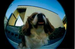 Jemma (goldfish,) Tags: dog cute lomography fisheye upshot