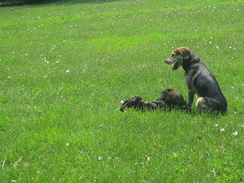 Ithaca Dog Park