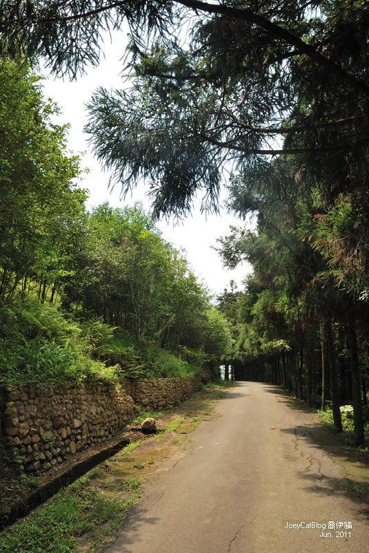 【南投】阿薩姆紅茶的故鄉。貓蘭山步道之旅DSC_1747