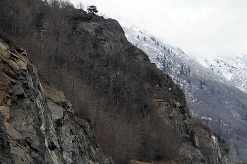 mountain goats_4899 web